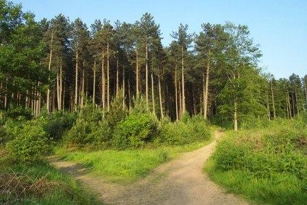 Cannock Chase - Area of Outstanding Natural Beauty in Staffordshire