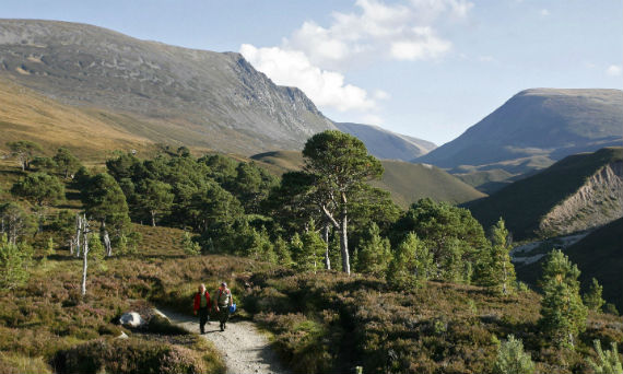 Rothiemurchus Estate in the Cairngorms National Park, Scotland